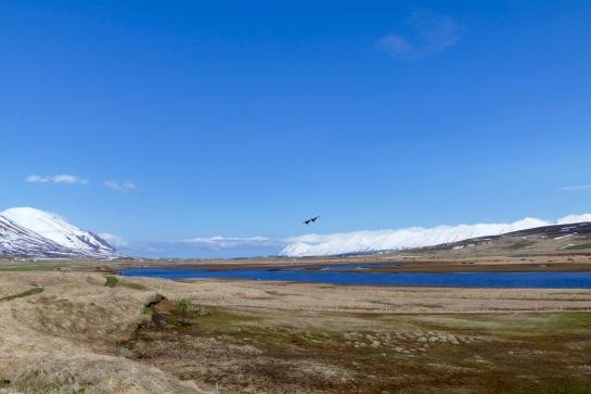 Dalvík Birdland Exhibition