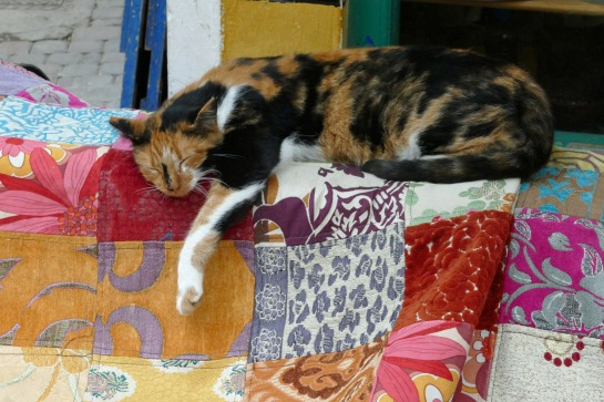Calico on Quilt